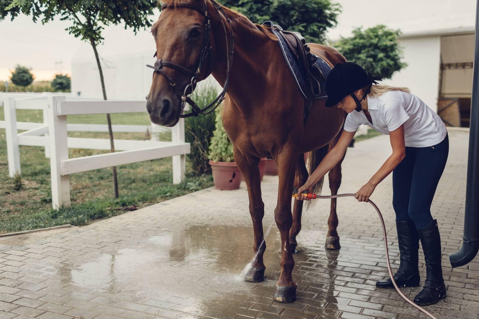 Girl combing horse